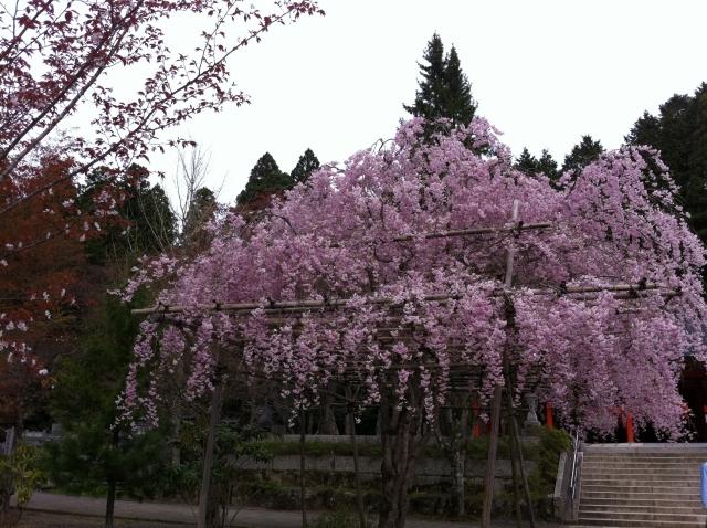 大阪のお花見ランキング1位は大阪城公園2位は造幣局の通り抜け3位は万博記念公園