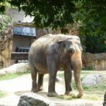 天王寺動物園の営業時間は?回るのに時間は?おすすめの動物は?