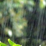 梅雨の旬の食べ物といえば?美味しいものは?レシピは?