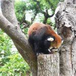 天王寺動物園の所要時間とおすすめデートコース!お弁当はどうする?