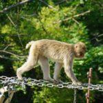 八木山動物園での所要時間はどれ位?営業時間と混雑状況!