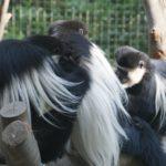 八木山動物園の入園無料の日はある?割引券や安い料金で利用する方法!